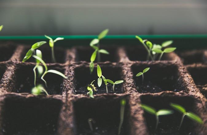 plante_cbd