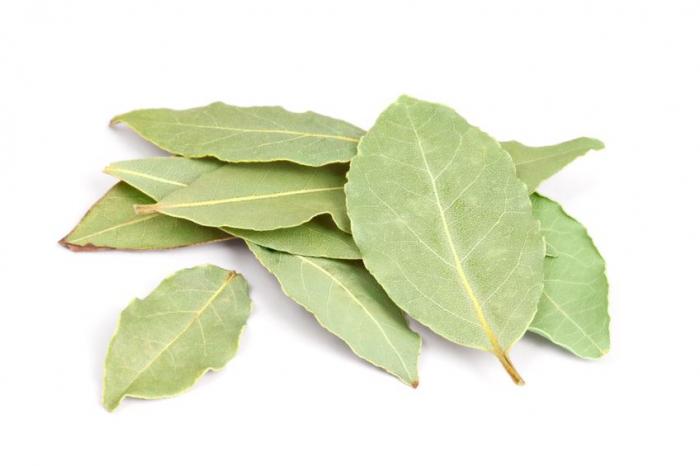 Ulei Esential Dafin, Bay Leaf 15ml [1]