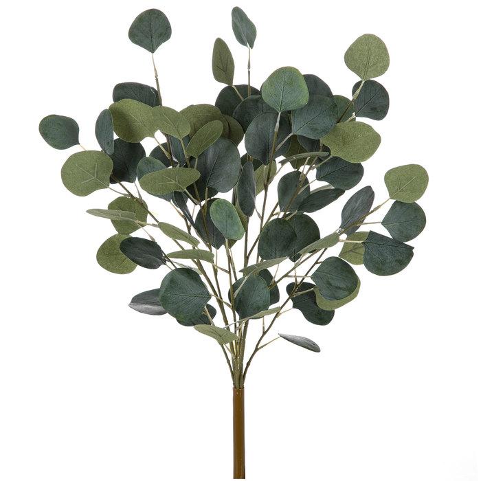 Ulei Esential Eucalipt Organic, Eucalyptus 15ml [1]