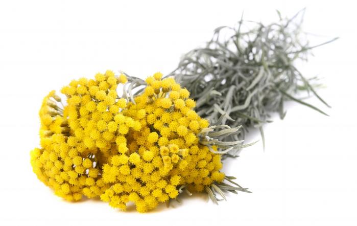 Ulei Esential Helichrysum, Immortelle 15ml [1]