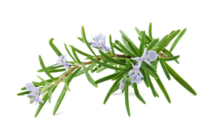 Ulei Esential Rozmarin, Rosemary 15ml [1]