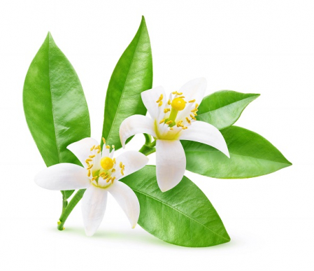 Ulei Esential Flori de Portocal, Neroli 5ml / 15ml [1]
