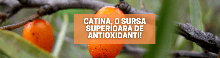 Catina, o sursa superioara de antioxidanti!