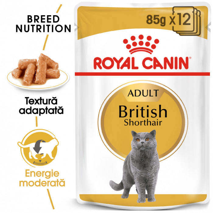Royal Canin British Shorthair Adult, plic hrană umedă pisici, (în sos), 12 x 85 g [0]
