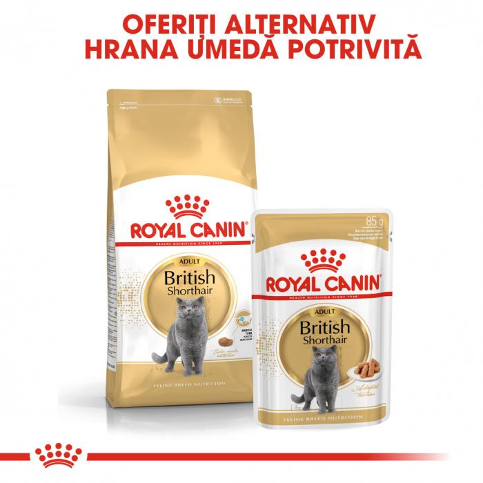 Royal Canin British Shorthair Adult, plic hrană umedă pisici, (în sos), 12 x 85 g [3]