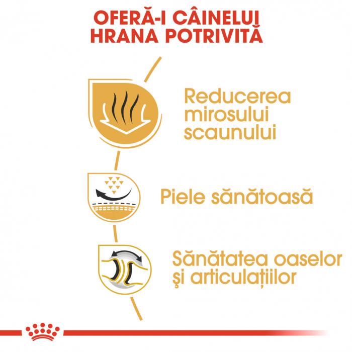 ROYAL CANIN BULLDOG ADULT 3 kg [2]