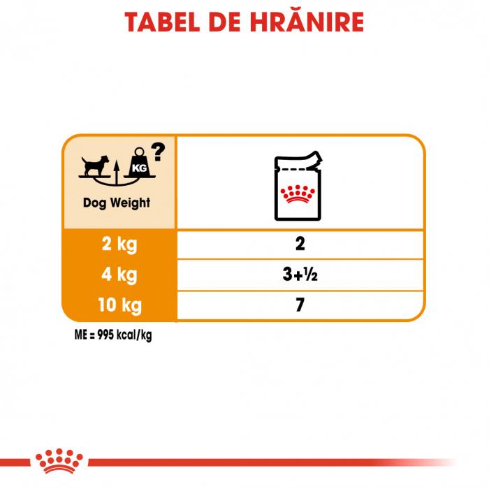 Royal Canin Coat Care Adult, plic hrană umedă câini, blană sănătoasă și lucioasă, (pate), 12X85G [5]