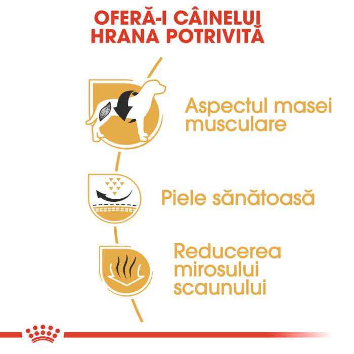ROYAL CANIN FRENCH BULLDOG ADULT 3 kg [2]