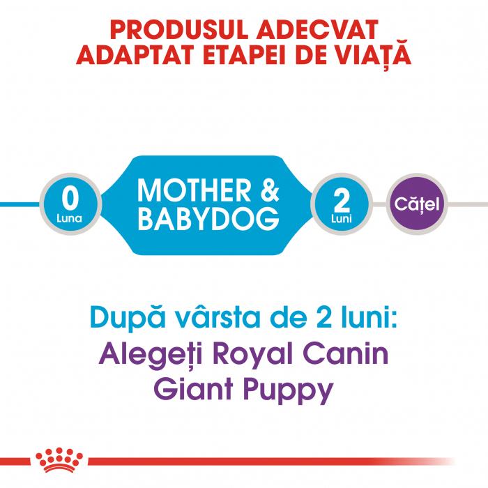 Royal Canin Giant Starter Mother & BabyDog, mama și puiul, hrană uscată câini,15 kg [1]