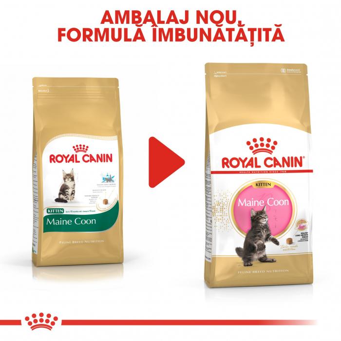 Royal Canin Maine Coon Kitten, hrană uscată pisici junior,  2 kg [4]