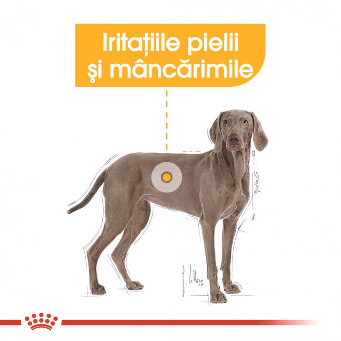 Royal Canin Maxi Dermacomfort, hrană uscată câini, prevenirea iritațiilor pielii, 10KG [3]