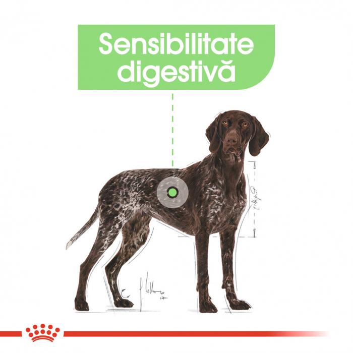 Royal Canin Maxi Digestive Care, hrană uscată câini, confort digestiv,  10Kg [3]