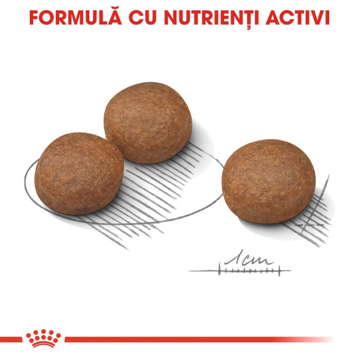 Royal Canin Medium Digestive Care, hrană uscată câini, confort digestiv,10KG [2]