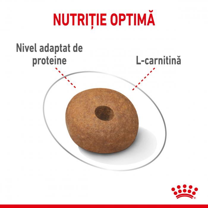 Royal Canin Medium Light Weight Care Adult, hrană uscată câini, managementul greutății,  10Kg [2]