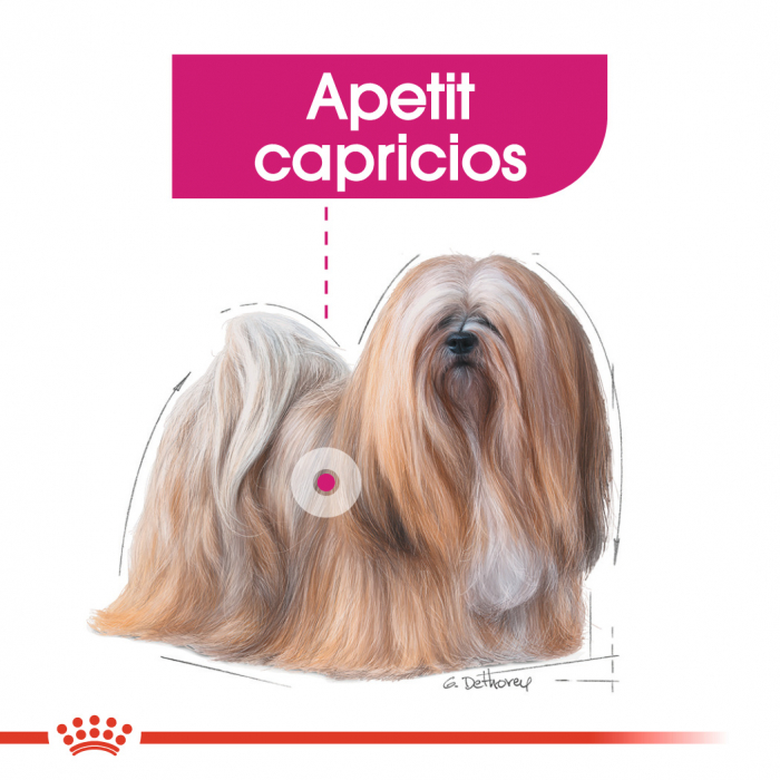 Royal Canin Mini Exigent, hrană uscată câini, apetit capricios, 3KG [2]