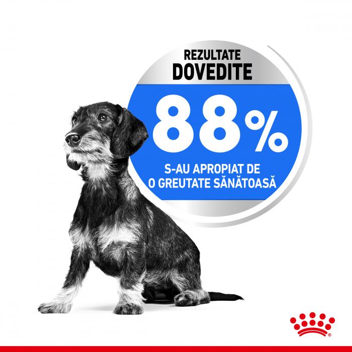 Royal Canin Mini Light Weight Care Adult, hrană uscată câini, managementul greutății, 3Kg [3]