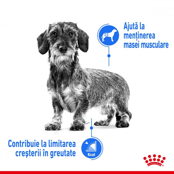 Royal Canin Mini Light Weight Care Adult, hrană uscată câini, managementul greutății, 3Kg [1]