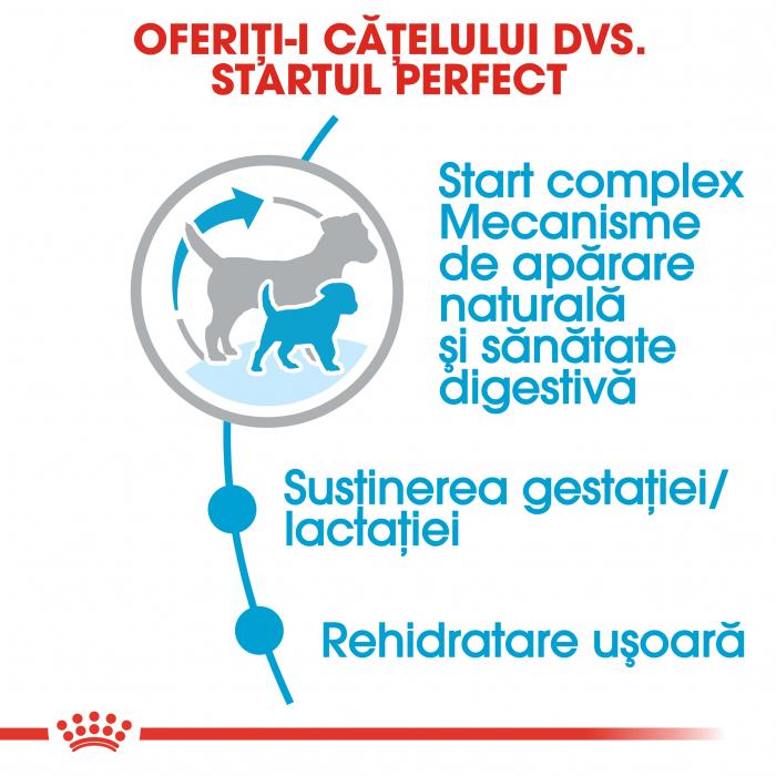 Royal Canin Mini Starter Mother & BabyDog, mama și puiul, hrană uscată câini 8.5 kg [3]