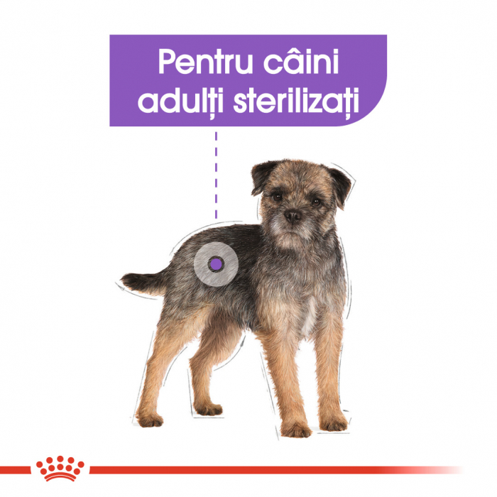 Royal Canin Mini Sterilised Adult, hrană uscată câini sterilizați, 1KG [3]