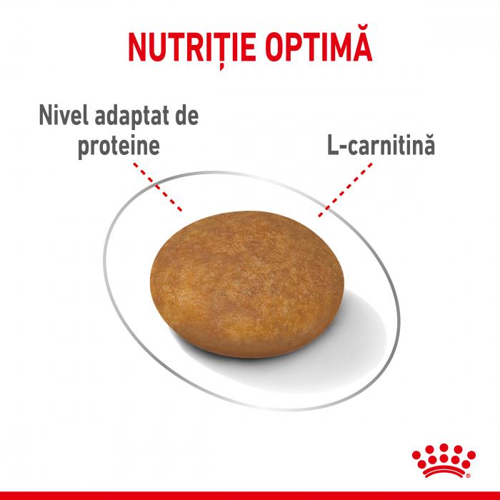 ROYAL CANIN X-Small Light Weight Care Adult, hrană uscată câini, managementul greutății, 500G [1]