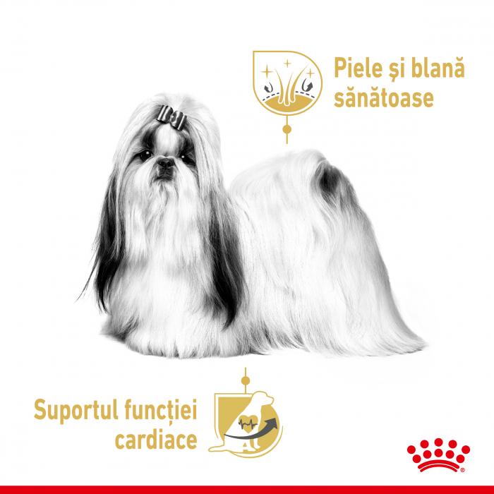 Royal Canin Shih Tzu Adult, plic hrană umedă câini, (pate),  12 x 85 g [1]