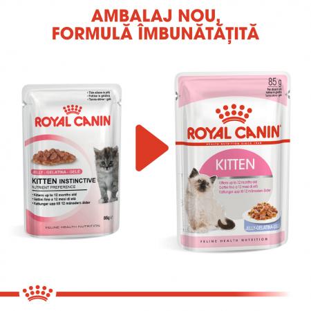 Royal Canin Kitten, bax hrană umedă pisici, (în aspic), 12 x 85 g [5]