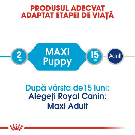 Royal Canin Maxi Puppy, bax hrană umedă câini junior, (în sos) 10 x 140 g [1]
