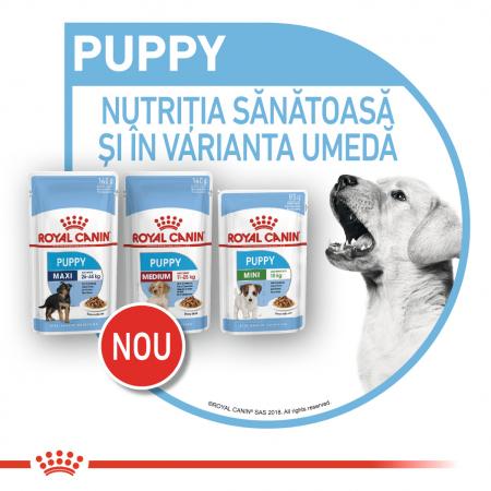 Royal Canin Medium Puppy, plic hrană umedă câini junior, (în sos),  10 x 140 g [7]
