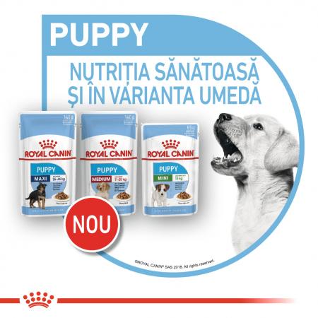 Royal Canin Mini Puppy, plic hrană umedă câini junior (în sos), 12 x 85 g [7]