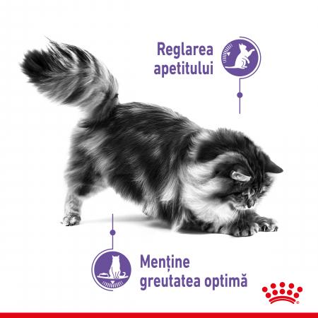Royal Canin Appetite Control Care, hrană uscată pisici, adult sterilizat, reglarea apetitului, 400G [1]