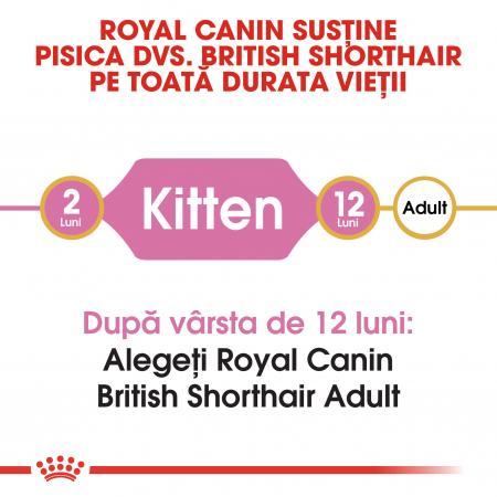 Royal Canin British Shorthair Kitten, hrană uscată pisici junior, 2 kg [1]