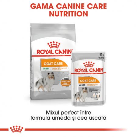 Royal Canin Coat Care Adult, plic hrană umedă câini, blană sănătoasă și lucioasă, (pate), 12X85G [4]