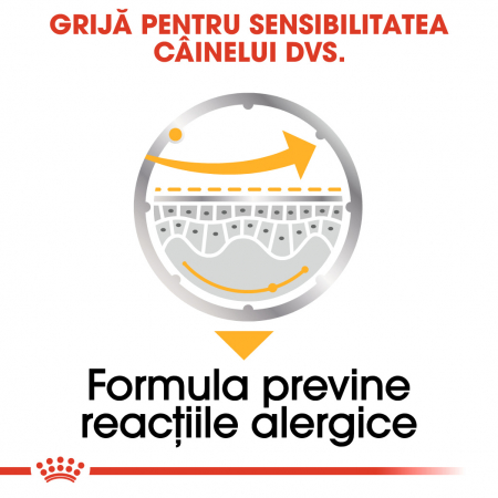 Royal Canin Dermacomfort Adult, bax hrană umedă câini, prevenirea iritațiilor pielii (pate), 12X85G [3]