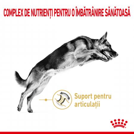 ROYAL CANIN GERMAN SHEPHERD ADULT 5+ 12 kg [2]