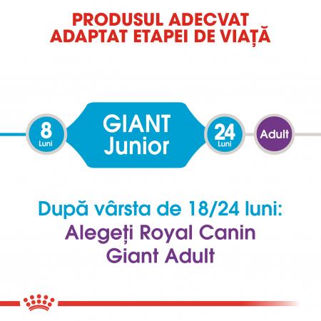 Royal Canin Giant Junior, hrană uscată câini junior, etapa 2 de creștere, 15 kg [1]