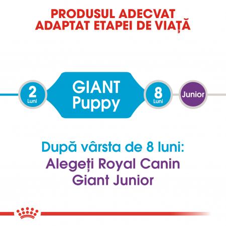 Royal Canin Giant Puppy, hrană uscată câini junior, etapa 1 de creștere , 3.5 kg [1]