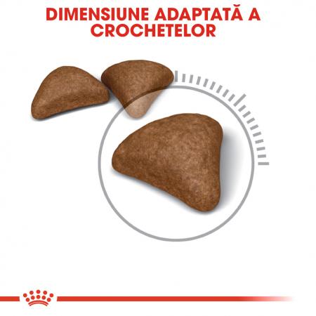 Royal Canin Hairball Care Adult, hrană uscată pisici, limitarea ghemurilor de blană 2 kg [2]