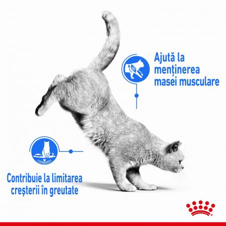 Royal Canin Light Weight Care Adult, plic hrană umedă pisici, managementul greutății, (în sos), 12 x 85G [5]