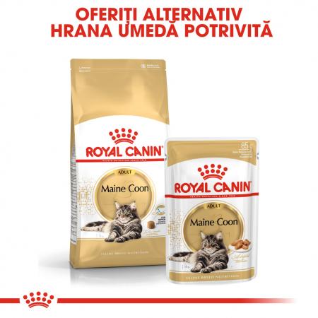 Royal Canin Maine Coon Adult, hrană uscată pisici, 4 kg [3]