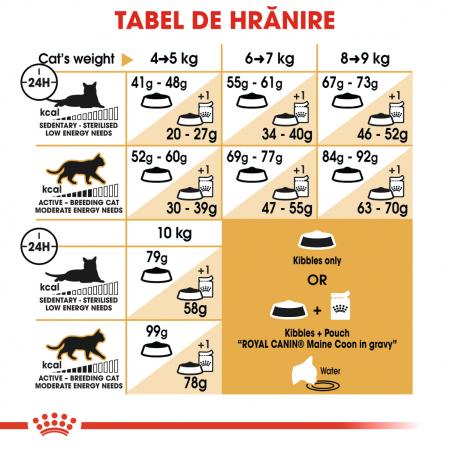 Royal Canin Maine Coon Adult, hrană uscată pisici, 4 kg [4]