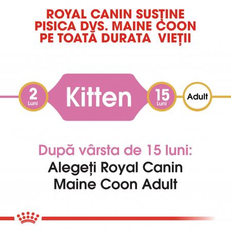 Royal Canin Maine Coon Kitten, hrană uscată pisici junior,  2 kg [1]