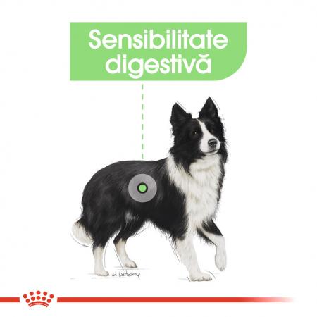 Royal Canin Medium Digestive Care, hrană uscată câini, confort digestiv, 3KG [3]