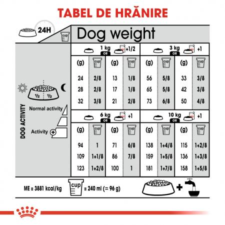 Royal Canin Mini Coat Care Adult, hrană uscată câini, blană sănătoasă și lucioasă, 1KG [5]