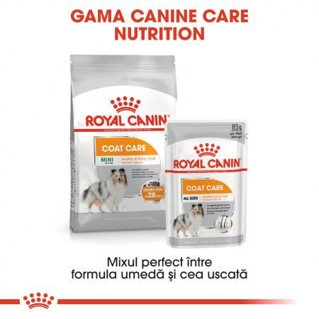 Royal Canin Mini Coat Care Adult, hrană uscată câini, blană sănătoasă și lucioasă, 3KG [4]
