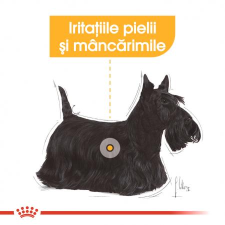 Royal Canin Mini Dermacomfort, hrană uscată câini, prevenirea iritațiilor pielii 1KG [3]