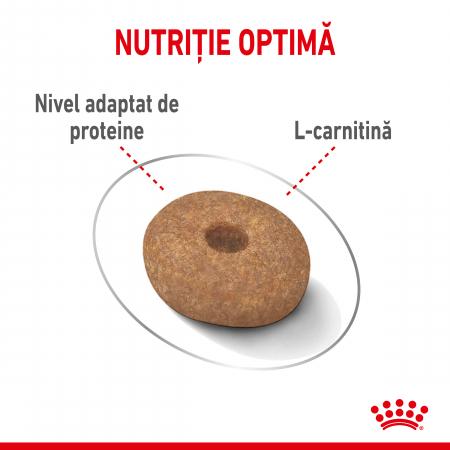 Royal Canin Mini Light Weight Care Adult, hrană uscată câini, managementul greutății, 8Kg [2]