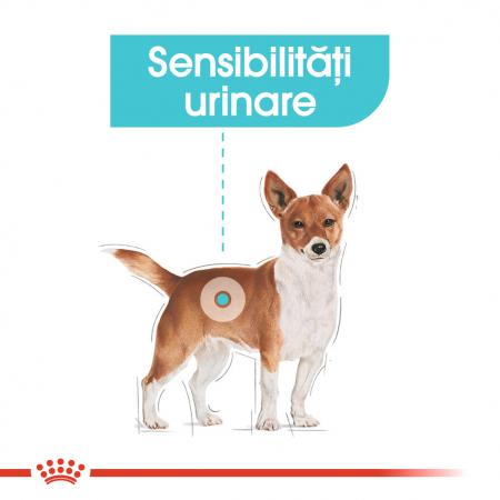 Royal Canin Mini Urinary Care, hrană uscată câini, sănătatea tractului urinar,1KG [1]