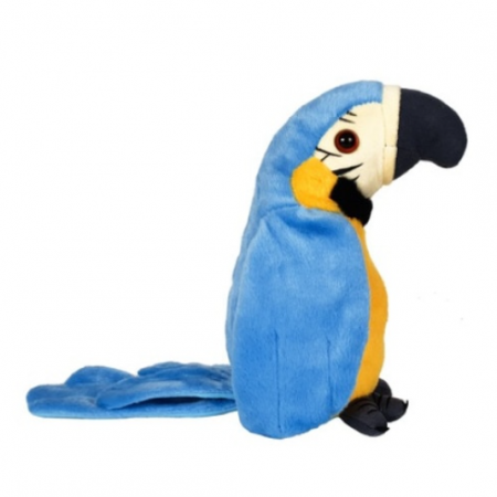papagal albastru [1]